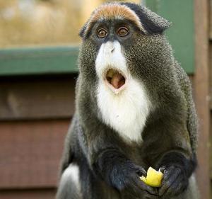 shocked-animals-009